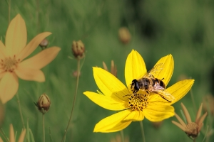 The Natural Power of Bees  Health Benefits of Bees