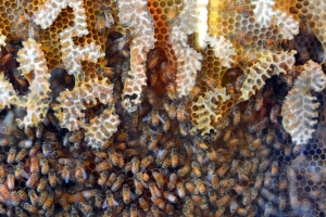 he Natural Power of Bees in a hive Health Plus Lifestyle